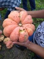 Acadêmicos de Agronomia do CNP participam de colheita de abóbora e melancia
