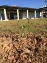 Alunos e professores realizam ação de arborização no CNP